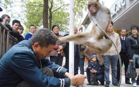 monkey_1544467c.jpg